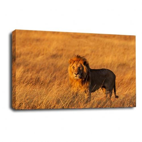Lion Africa Animal Canvas Wall Art Picture